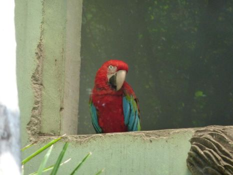 Parrot by SapphireCookie