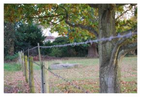 Barbed Wire by BEH1NDTHET1MES