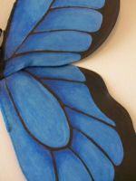 Blue Beauty Adult wings 2 by KimsButterflyGarden