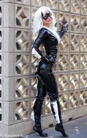 Black Cat 5 by AlisaKiss