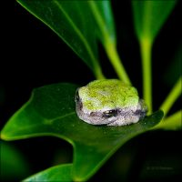 Small Frog by bamako