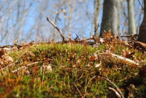 Moss by bmxer197
