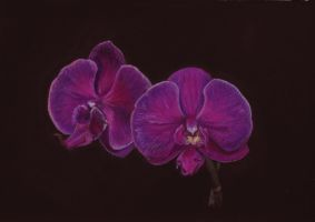 Purple Orchid: Let's try this again... by LuthienneTinuvielle
