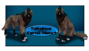 Tokotas NOW IN Feral Heart! by KuuNara