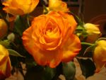 Stock: Orange Rose by FantasyFailure-Stock