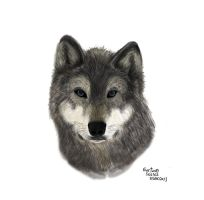 Wolf by Gustavohis