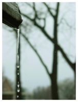rainwater by FigoTheCat