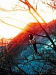 Magpie Sunset by IoannisCleary
