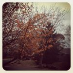 Cycle of Fall outside my house by AtomSpectre