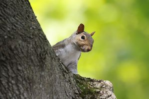 Squirrel 4 by EdgedFeather