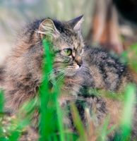 wild cat by houssam6464