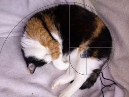 Mizi's performing Fibonacci spiral by Abstract-scientist