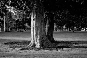 Park Trees by snakstock