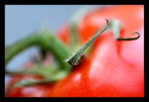 Macro tomate by JVre