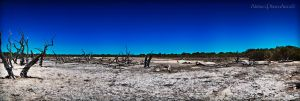 The Lake Bed by AbbottPhotoArt