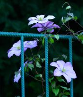 LAST FLOWERS ON FENCE by SvitakovaEva