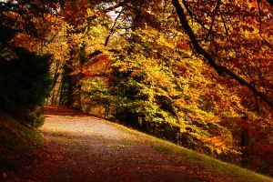 Autumn_05 by rejmann
