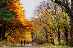 Brooklyn Fall at Park Slope by KasraRassouli