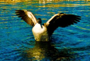 spread YOUR wings and fly by blackbelly