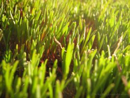Young grass by ShcheglinaT
