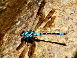 Blue Dragonfly by Dontheunsane