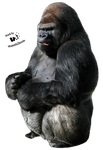 Cut-out stock PNG 40 - gorilla by Momotte2stocks