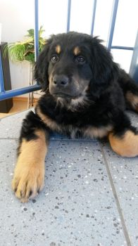 Our New Puppy Sam by Skyfights