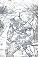 Wolverine Digital Drawing by R.A.M. by ramstudios1