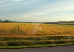 Soybeans-getting-ready by photogatlarge