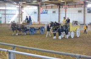 Topsfield Fair, Horse Handler Competition 11 by Miss-Tbones