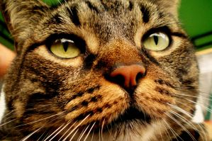 cat zoom by frimmi