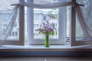 flowers in the window , most of this spring by zora-iuga