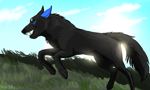 Roam -Contest Entry by WolfShadow513
