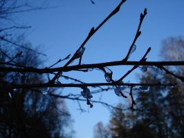 The Twig by Lukotus