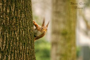 squirrel by ArkanumTenebrae