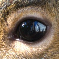 Eye of the Squirrel by countconkula