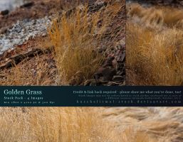 Golden Grass - Stock Pack by kuschelirmel-stock