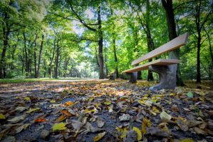 Autumn bench by tomsumartin