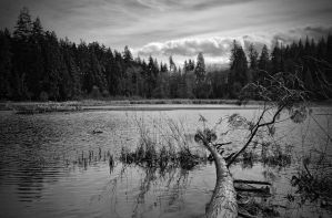Beaver Lake, Stanley Park by DTherien