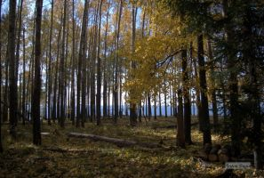The Edge of The Forest by bagin-toha