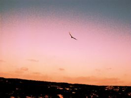 Soaring Freedom by SweetSurrender13