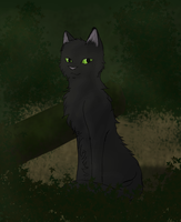 Hollyleaf by Eveningkitteh225
