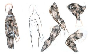 new anatomy study by kamawanai