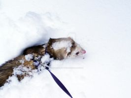 SNOW FERRET by WishfulHamadryad