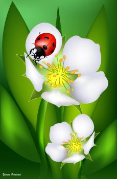 Ladybug On A Lily by itaocta