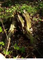 Tree Stump 22 by AnitaJoy-Stock