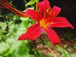 Red Flower (2) by LMW-The-Poet