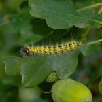 Caterpillar - D675 by AGF81