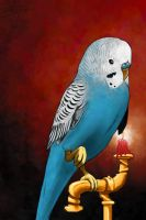 Budgie! by MakingPicsSlowly