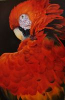 Scarlet Macaw by orihah14